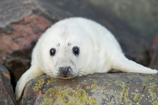 Seal Pup Image